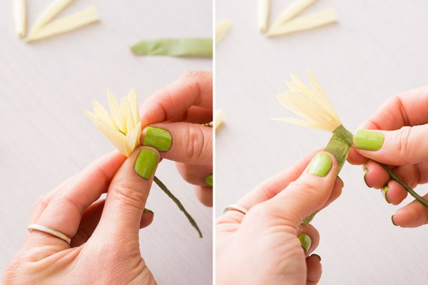 Daffodil-adding-first-petals (1)