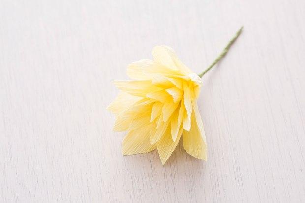 Daffodil-Final