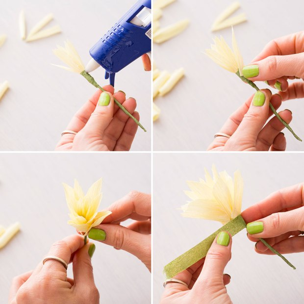 Daffodils-adding-more-petals