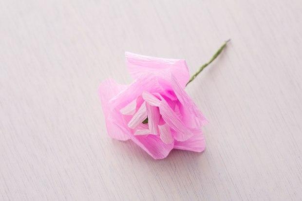 Ranunculus-Final